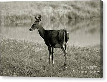 Southern Indiana Autumn Canvas Print - Doe By The Waters Edge by Scott D Van Osdol