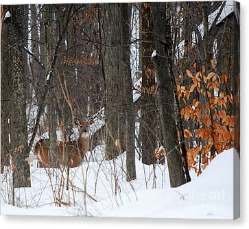 Canvas Print featuring the photograph Doe In Woods by Lila Fisher-Wenzel