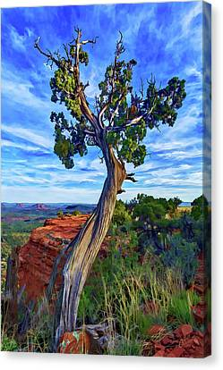 Abeautifulsky Canvas Print - Doe Mountain Juniper by ABeautifulSky Photography by Bill Caldwell