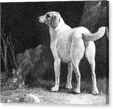 Dog, 1788 Canvas Print by George Stubbs