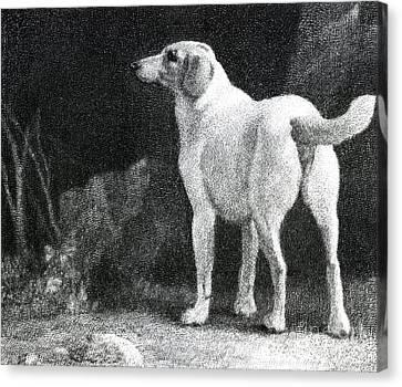 Dog, 1788 Canvas Print