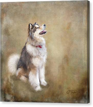 Malamute Canvas Print - Master Of The Domain by Colleen Taylor