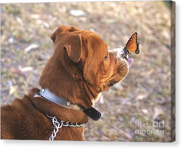 Dog And Butterfly Canvas Print by John  Kolenberg