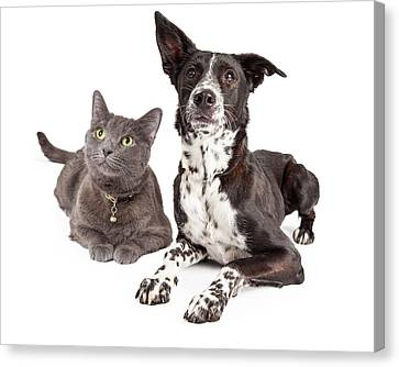 Dog And Cat Laying Looking Up Canvas Print by Susan Schmitz