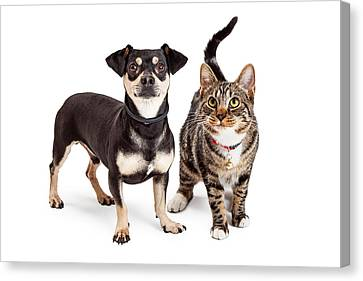 Dog And Cat Standing Looking Up Together Canvas Print
