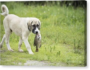 Dog Gone Fishing Canvas Print by Juli Scalzi