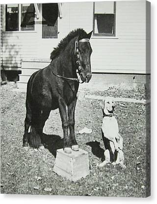 Dog And Pony Show Canvas Print by Krista Barth