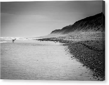 Dog And The Beach Canvas Print