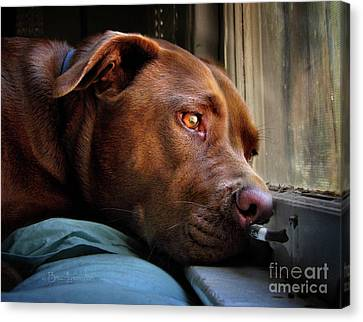 Dog At Window Portrait Canvas Print