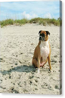 Dog Beach Canvas Print