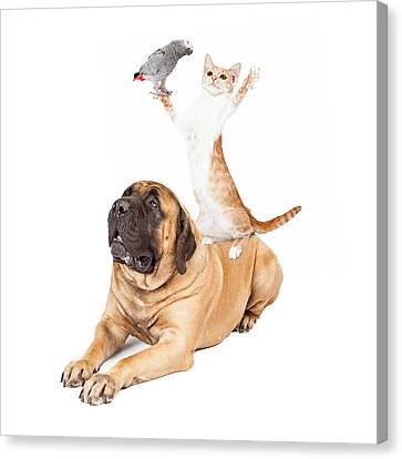 Dog Cat And Bird Playing Canvas Print by Susan Schmitz