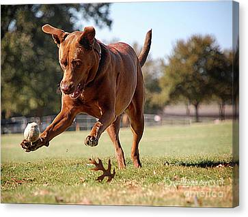 Dog Chasing Ball Canvas Print