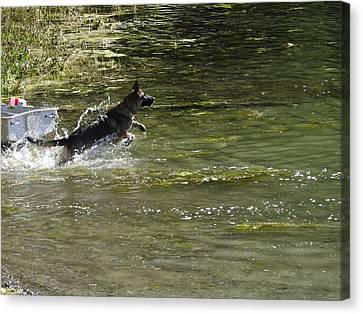 Dog Chasing His Stick Canvas Print