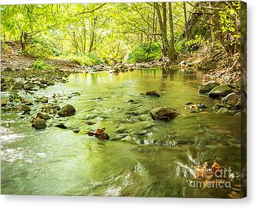 Dog Creek Canvas Print by Linda Steider