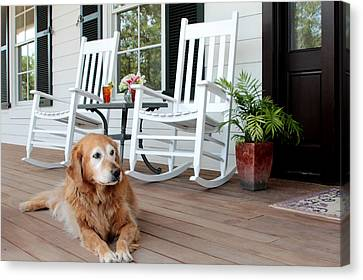 Dog Days Of Summer Canvas Print by Toni Hopper