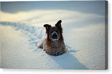 Dog Dog In Snow                   Canvas Print