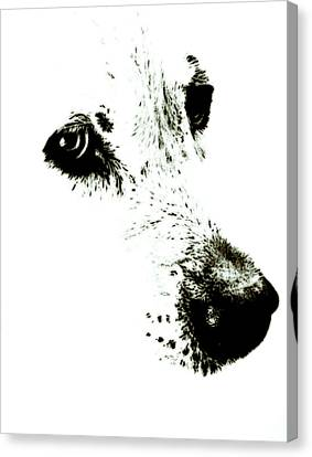 Dog Face Canvas Print by Frank Tschakert