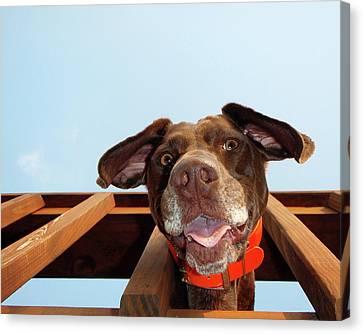 Dog Gone Crazy Canvas Print by Brook Burling