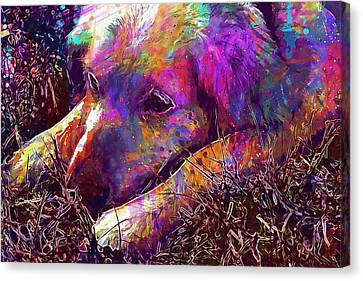 Dog Head Lazy Dog Animal Pet  Canvas Print