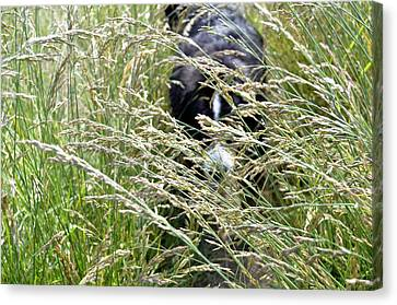 Dog Hiding In The Grass Canvas Print by Pelo Blanco Photo