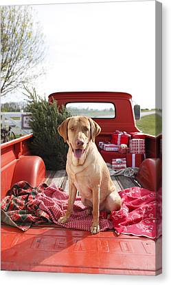 Dog In Truck Bed With Pine Tree Outdoors Canvas Print