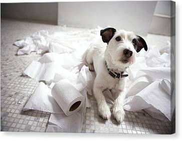 Toilet Canvas Print - Dog Lying On Bathroom Floor Amongst Shredded Lavatory Paper by Chris Amaral