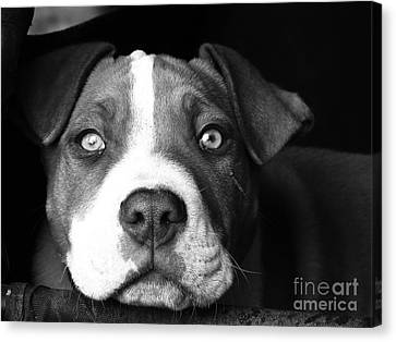 Dog - Monochrome 2 Canvas Print