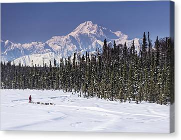 Dog Musher Martin Buser Runs His Team Canvas Print by Jeff Schultz