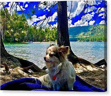 Canvas Print - Dog Named Carl by Cadence Spalding