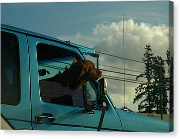 Dog Of A Day Canvas Print by Robert Evans