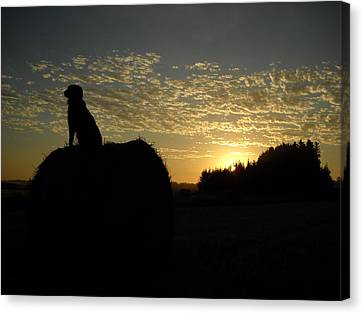 Dog On Hay Greeting Sunrise Canvas Print