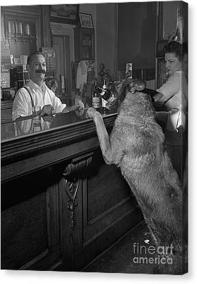 Dog Ordering A Beer Canvas Print by The Harrington Collection