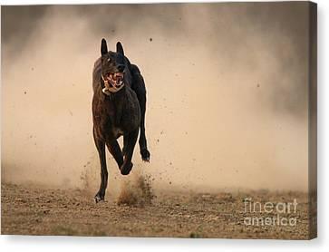 Dog Race Track Canvas Print - Dog Run by Tahir Abbas