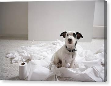 Domestic Bathroom Canvas Print - Dog Sitting On Bathroom Floor Amongst Shredded Lavatory Paper by Chris Amaral