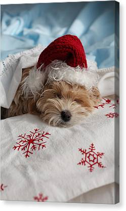 Dog Sleeping In Bed With Santa Hat Canvas Print