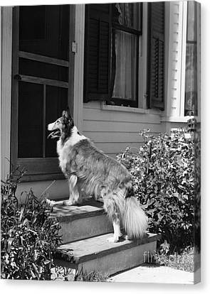 Dog Waiting To Be Let In To House Canvas Print by H. Armstrong Roberts/ClassicStock