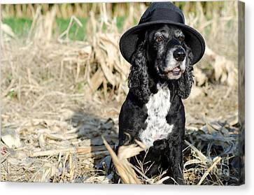 Dog With A Hat Canvas Print by Mats Silvan