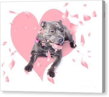 Dog With Pink Rose On Heart Shape Background Canvas Print by Jorgo Photography - Wall Art Gallery
