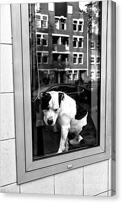 Doggy In The Window Mono Canvas Print
