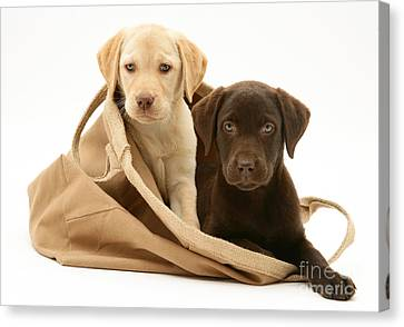 Dogs In Cloth Bag Canvas Print