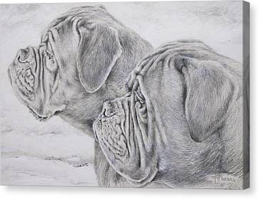 Dogue De Bordeaux Canvas Print by Keran Sunaski Gilmore