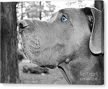 Four Animal Faces Canvas Print - Dogus by Jenny Revitz Soper