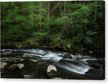 Canvas Print featuring the photograph Dogwood Along The River by Mike Eingle