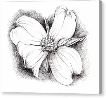 Dogwood Blossom Charcoal Canvas Print by MM Anderson