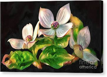 Flowering Canvas Print - Dogwood Blossoms On A Branch by Lois Bryan