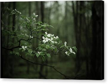 Canvas Print featuring the photograph Dogwood Branch by Shane Holsclaw