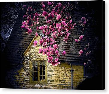 Dogwood By The Window Canvas Print