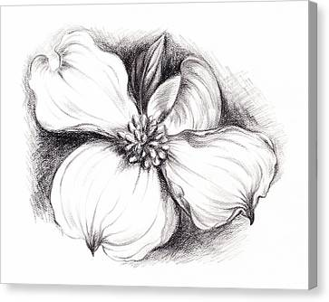 Dogwood Flower In Charcoal Canvas Print by MM Anderson
