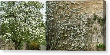 Dogwood Flowers And Apple Blossom  Canvas Print