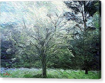 Dogwood In Bloom Canvas Print by Gerhardt Isringhaus
